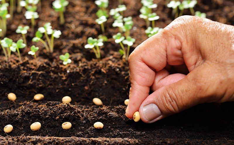Người gieo hạt