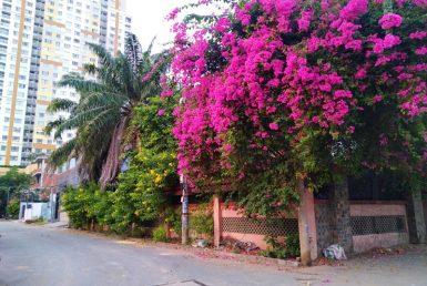 Nhà đường số 64 Thảo Điền quận 2 276m2
